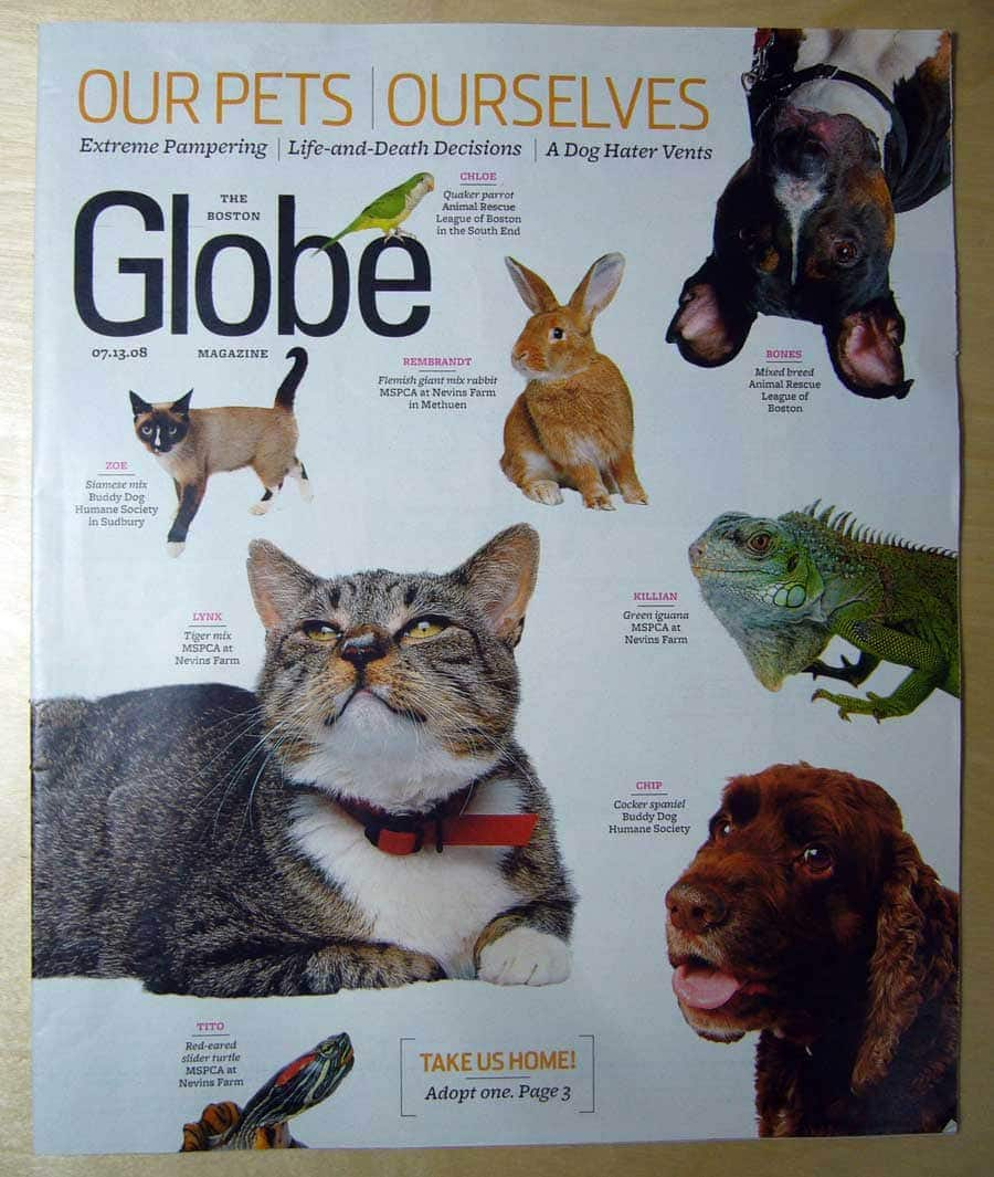 Hepper featured in the Boston Globe Sunday Magazine