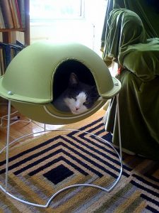 Lucy in the pod