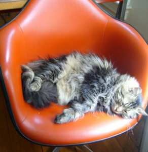 Cat in Eames Chair