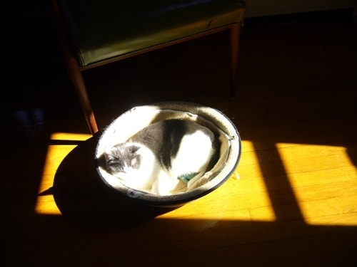 Happy Hepper Cat in the sun