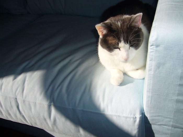 No More cat fur