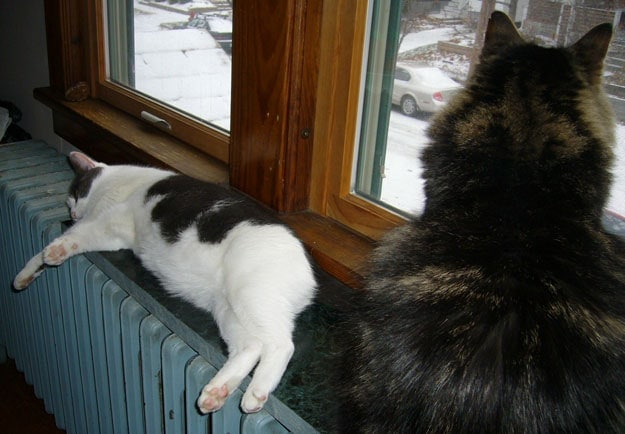 Cats on Heater