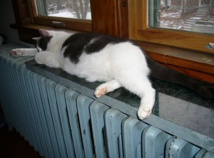 Cat on Heater