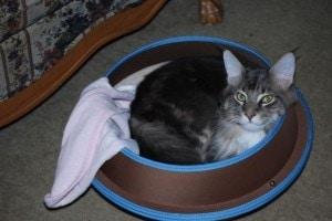 Cat in Hepper Nest Bed