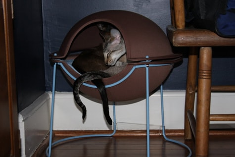 2 cats in a hepper pod cat bed