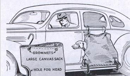 Is Your Dog Allowed in Your Car?