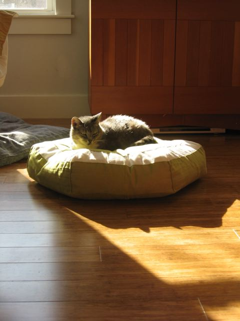 Asya the cat on her Hepper bed