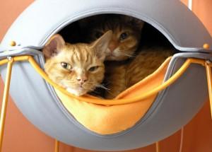 Julie's orange cats in a Pod cat bed