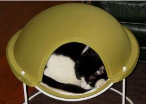 Karen's kitty in cat bed