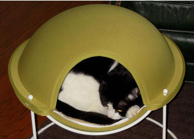Karen's Comfy Kitty