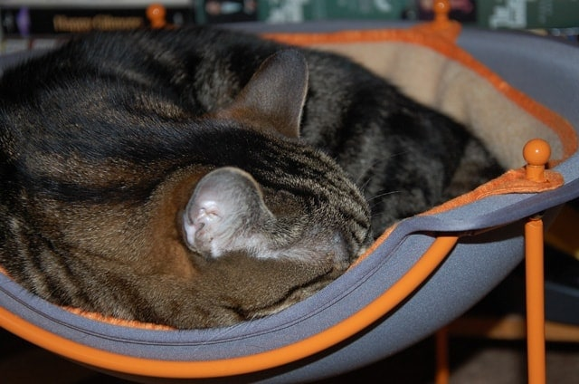 Tommy in his Pod cat bed
