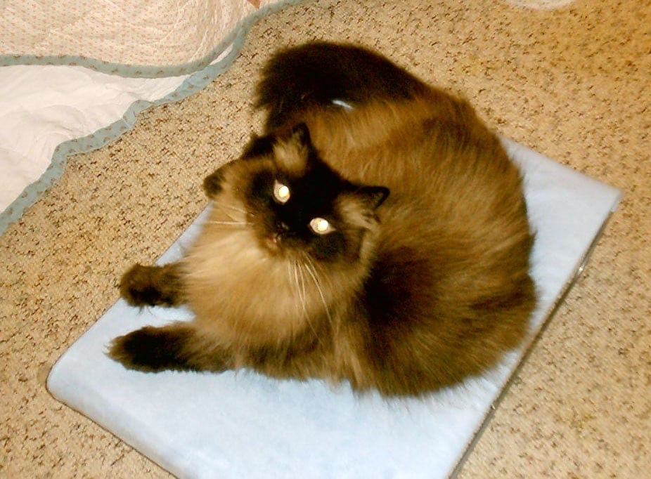 hepper Wave Cat bed