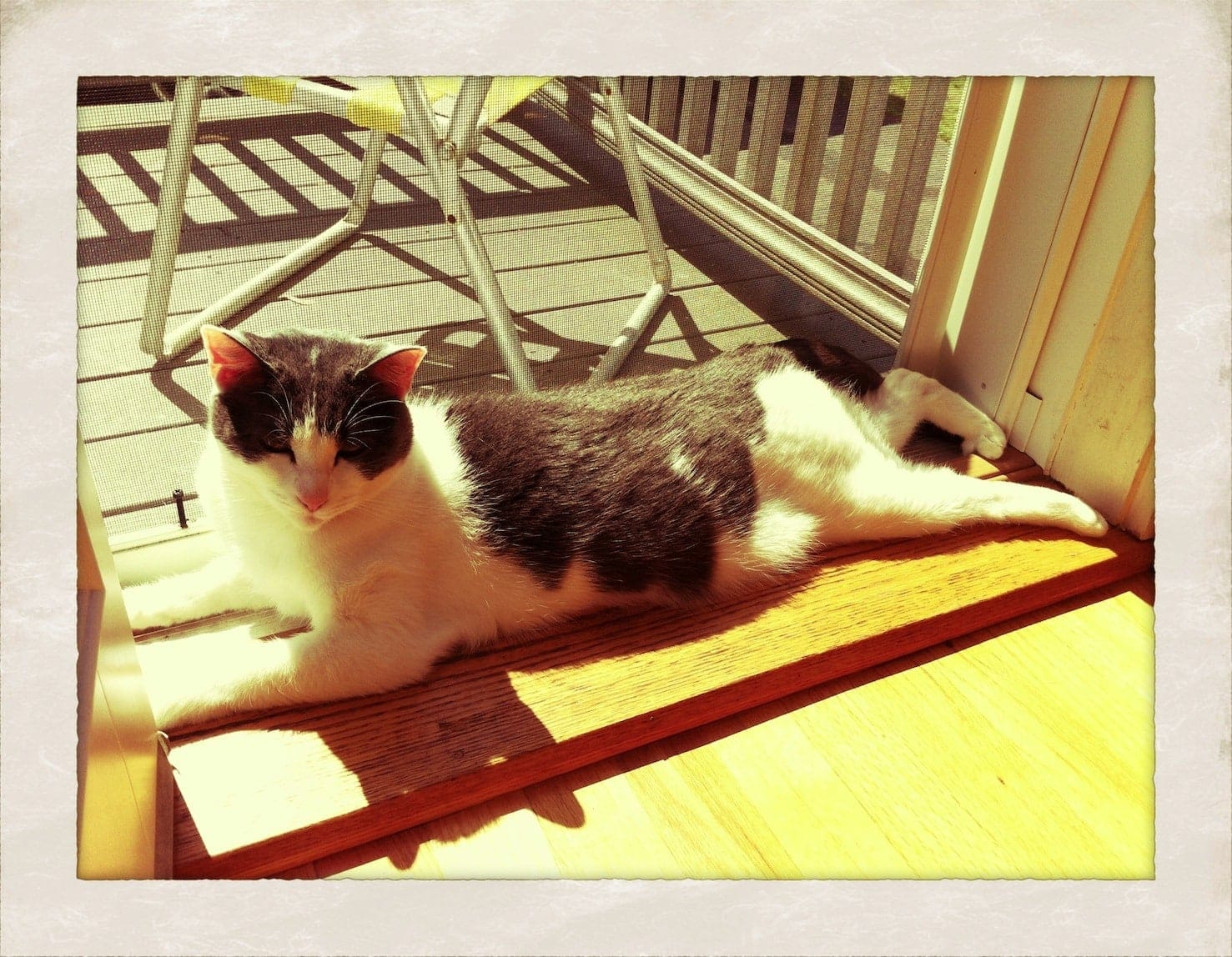 Sun Bathing Kitty