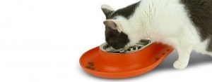 Cat eating from Hepper NomNom dish photo