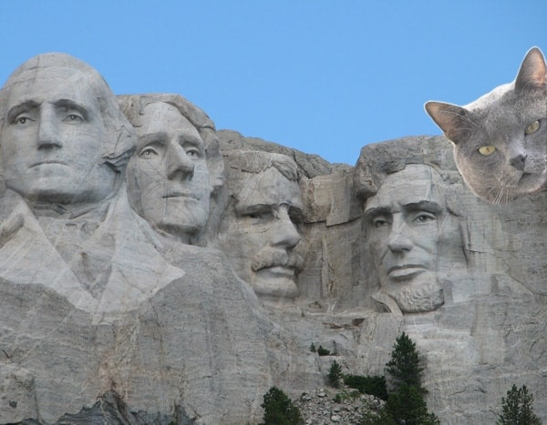 Mt Rushmore with cats