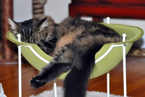 Cat in Hepper Pod Cat Bed Photo