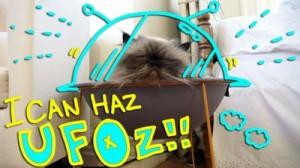 My Cat Goma in Hepper Pod