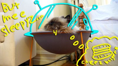 My Cat Goma in Hepper Pod