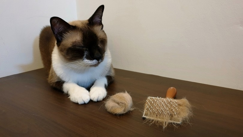 young cat sitting on wooden table with hairball
