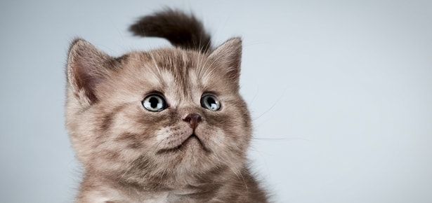 9 Foods That Are Not Good For Your Cat