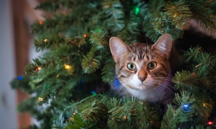 6 Pet-Inspired Holiday Decoration Ideas (Festive & Easy)