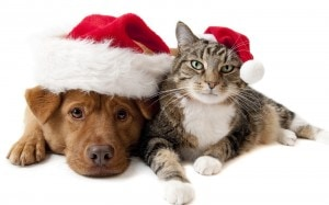 cat and dog Christmas