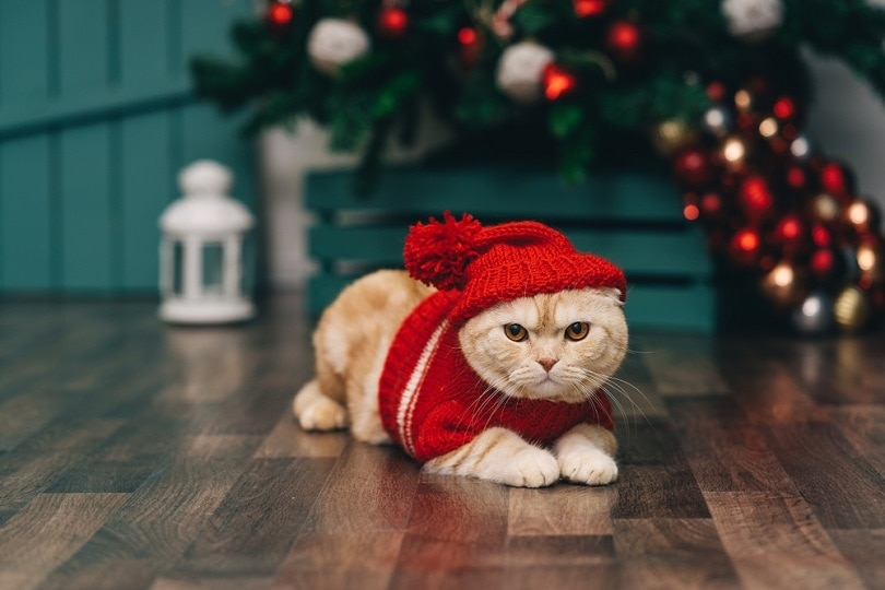 25 Cool Cat Holiday Cards: Christmas, Valentines, Parent Days & More!