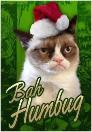 Cool Cat – Holiday Cards