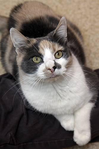 Adopt Little Callie – Best Friends Sanctuary