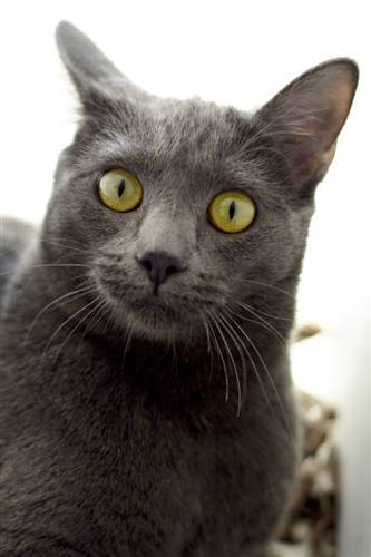 Adopt Zinnia – Best Friends Animal Sanctuary – Utah