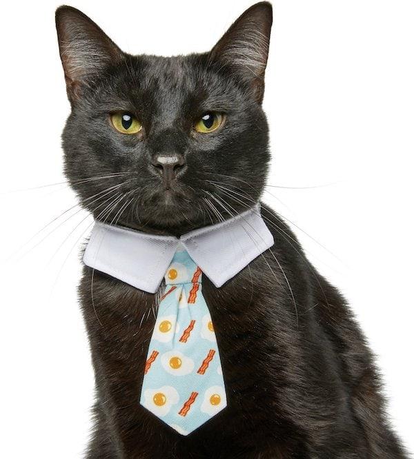 Frisco brunch necktie Chewy