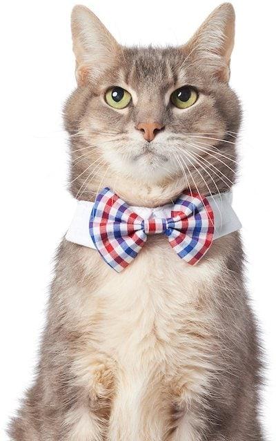 Frisco patriotic cat necktie Chewy