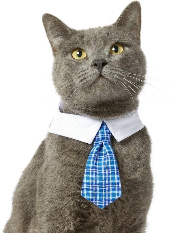 Frisco plaid cat necktie Chewy