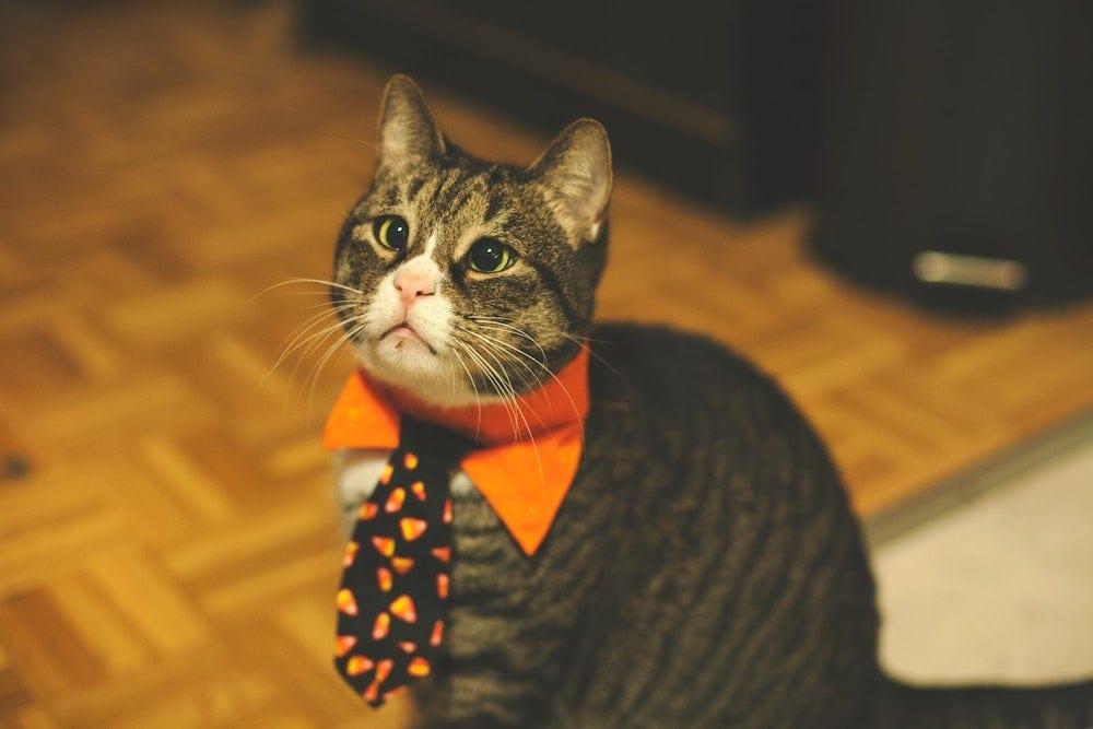 homemade cat necktie