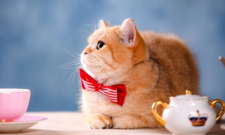 8 Amazing Necktie Ideas for Cats