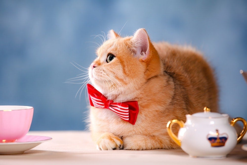 neckties for cats