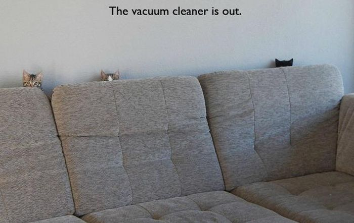 cats in couch