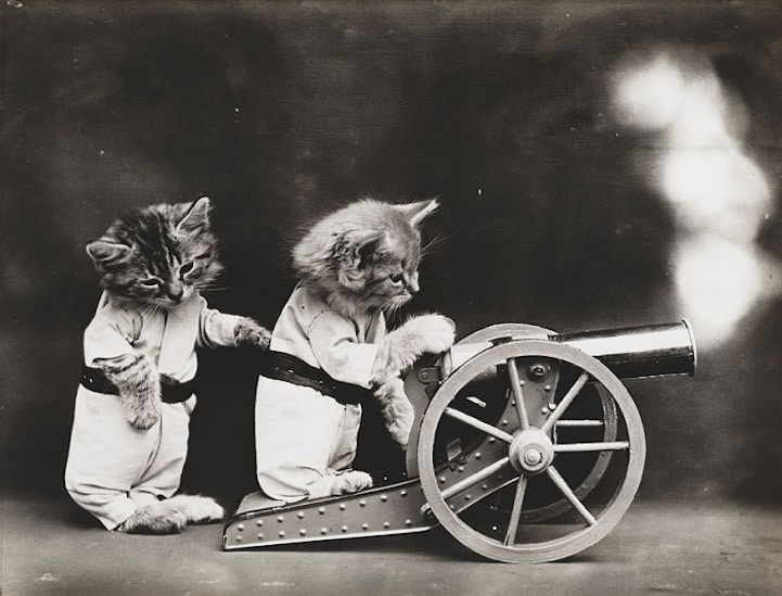 kitty cannon lol cat