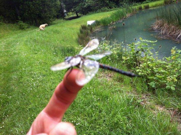dogpoopdragonfly