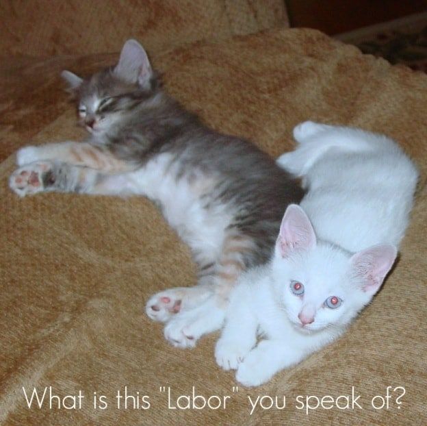 Top Ways Your Cat Can Enjoy Labor Day…Or Not.
