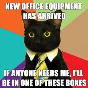 Office_cat