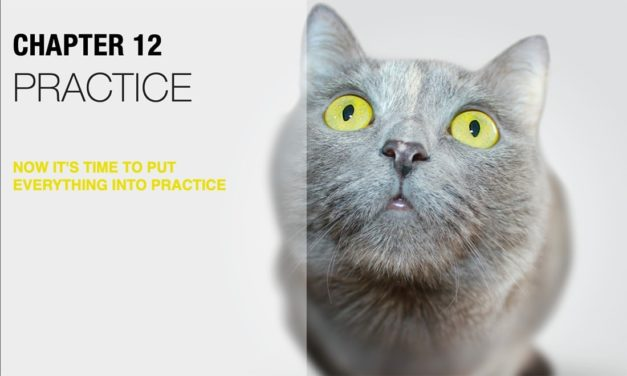 How to Put the Happy Cats Guide eBook Into Practice