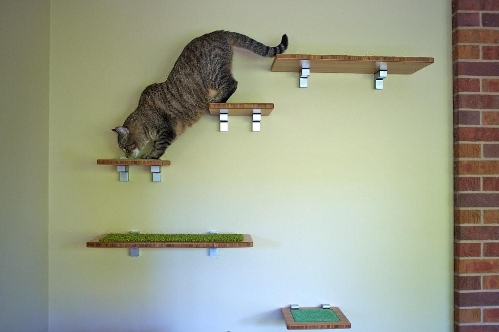 Cat on floating shelves