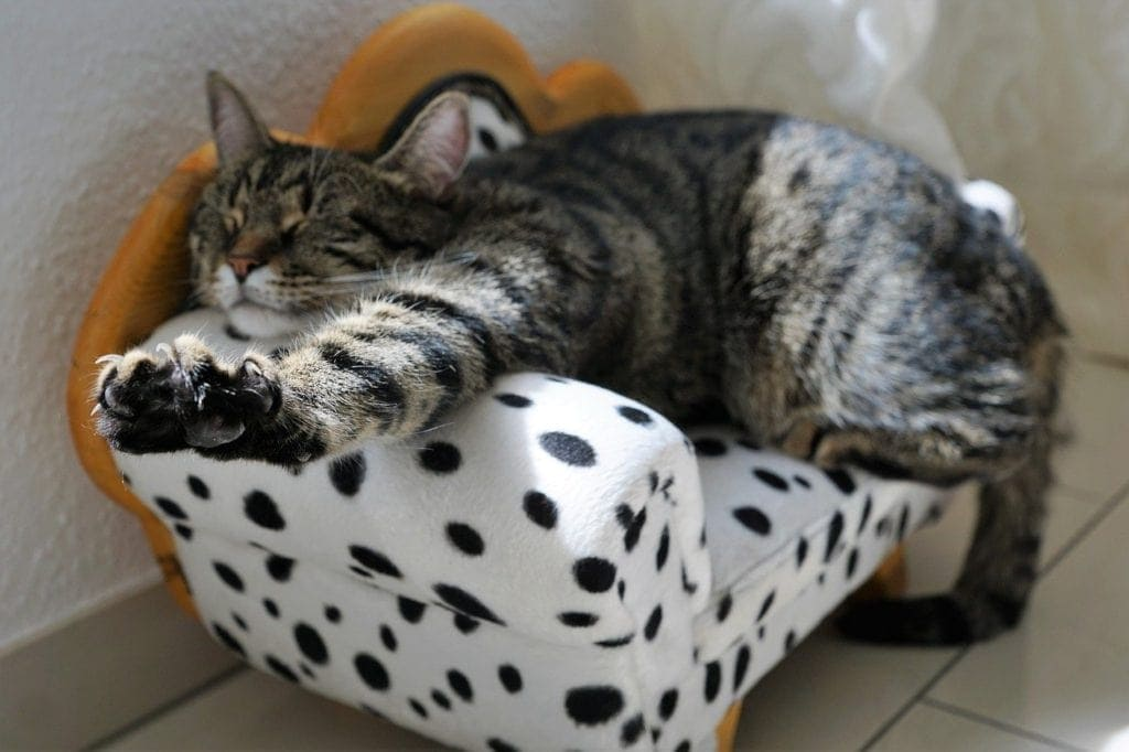 cat sleeping on a tiny couch