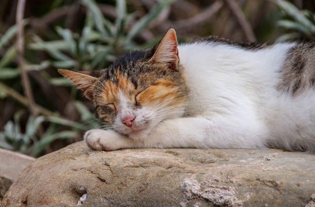 cute orange and white kitten sleeping on rock outside