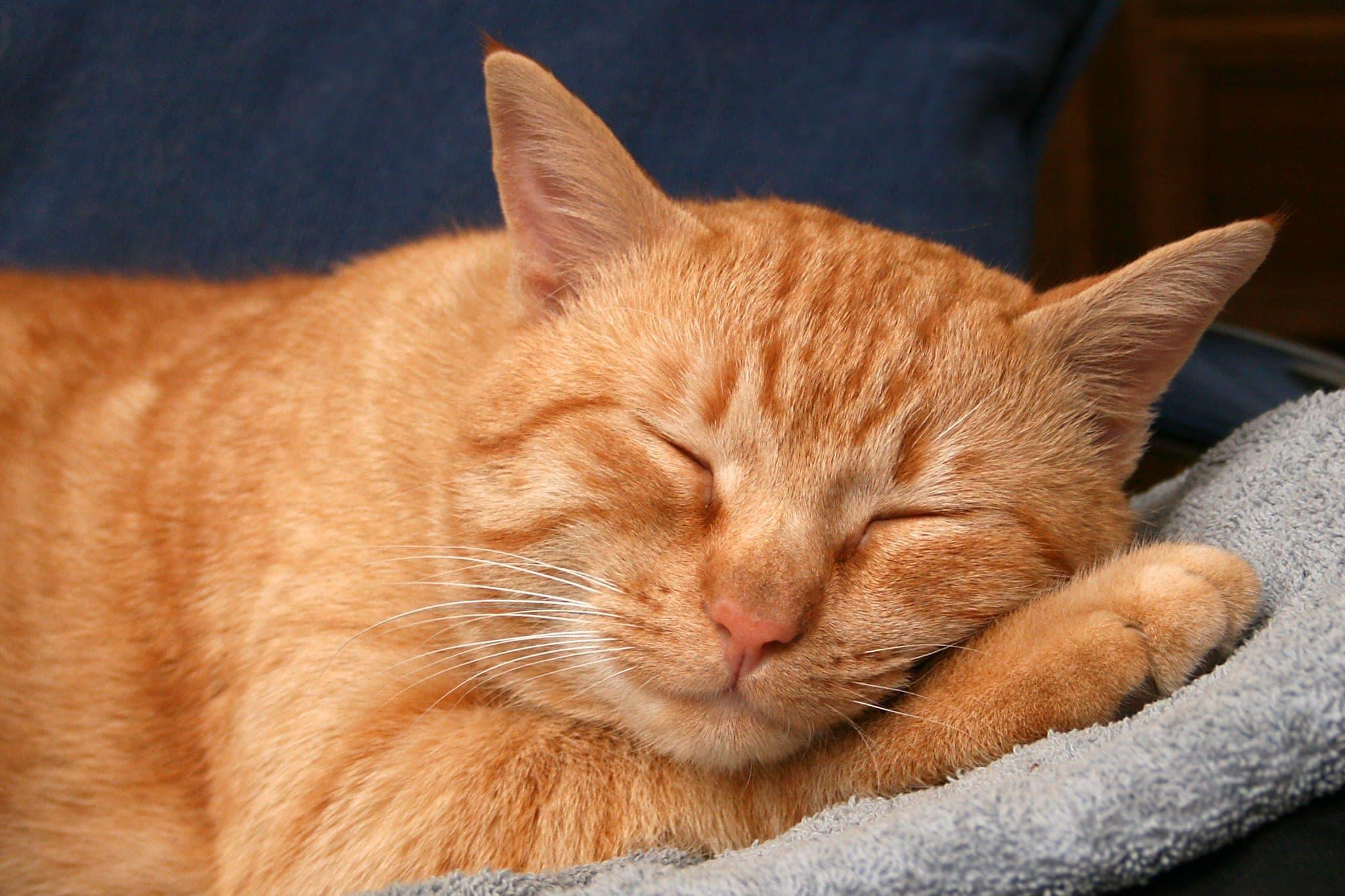 Cat's Sleep