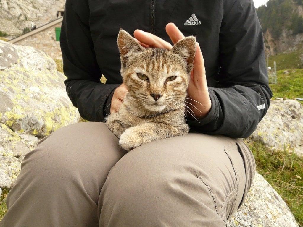 cat-9251_1280