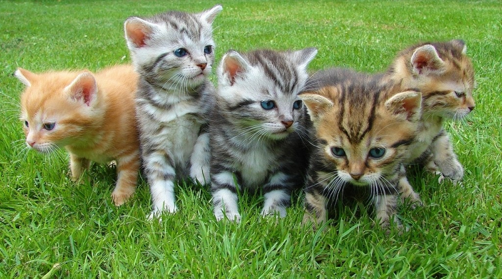 assorted colors of kittens in grass