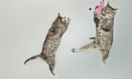Best Tips to Get Your Cat Playing
