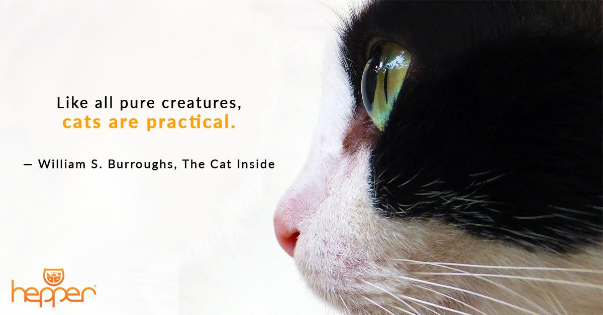 Best Cat Quotes – William S. Burroughs